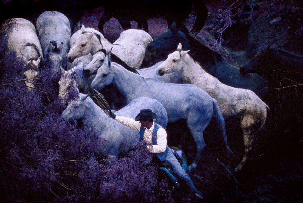 Turm der blauen Pferde
